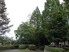Dscn1033a